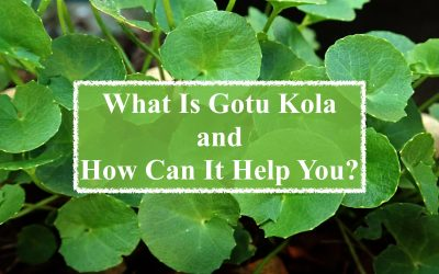 What Is Gotu Kola and How Can It Help You?